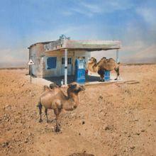 Tricot met digitale print woestijn