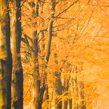 Fotopaneel Herfst