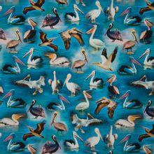 Tricot met pelikanen