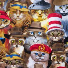 Katoen met Katten