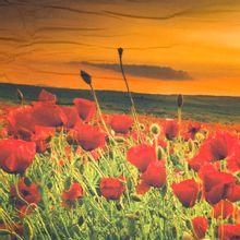 Paneel met fotoprint van klaprozen veld