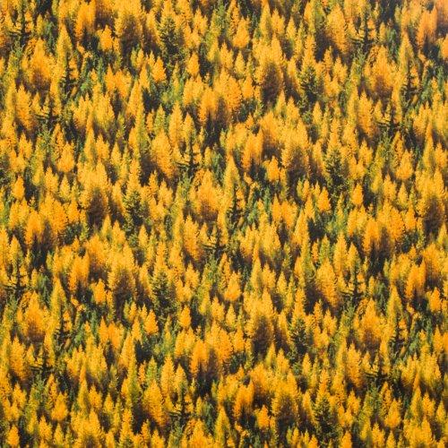 Landschap quilt met herfst bomen